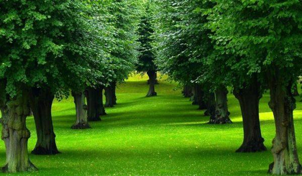 Un'analisi della Coldiretti sugli alberi