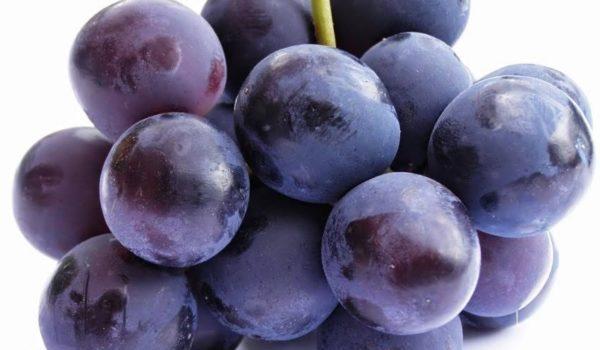 Torna il Salone del Vino Piceno