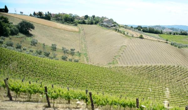 Il vino del piceno arriva a Tipicità