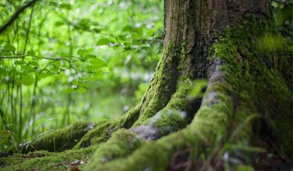 500 mila euro per la stesura dei Piani di gestione forestale